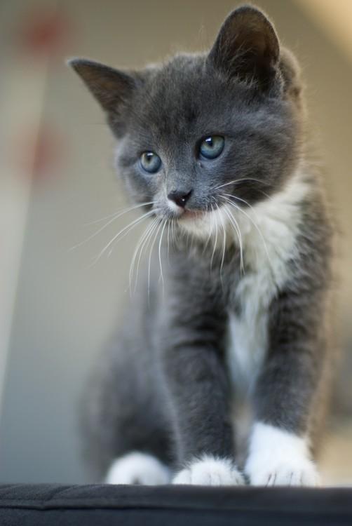 cats_151.jpg
