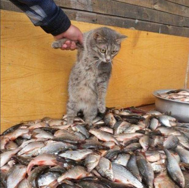 funny-cat-and-fishs.jpg