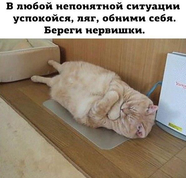 uYhcc_p2ahE.jpg